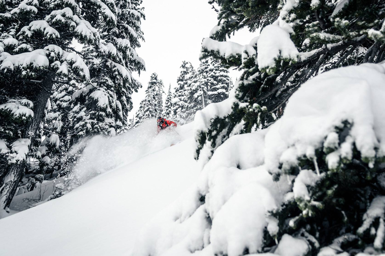 Whistler is famous for its deep powder and well graded trees